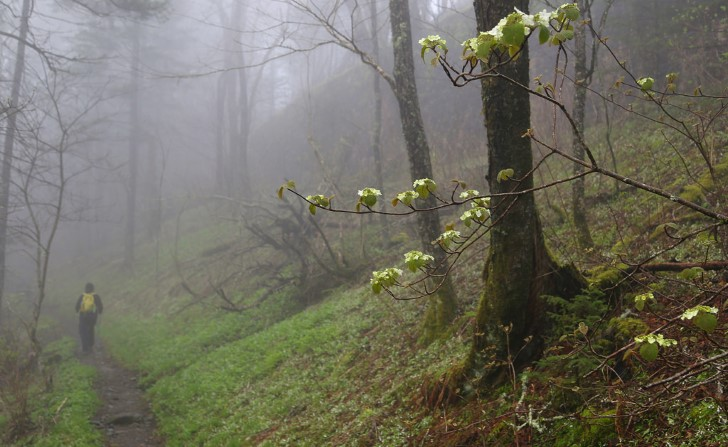 Hombre camina por el bosque