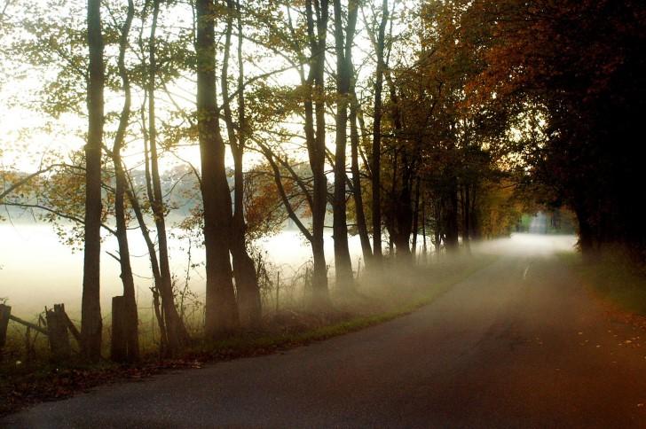 Neblina sobre la carretera en el bosque