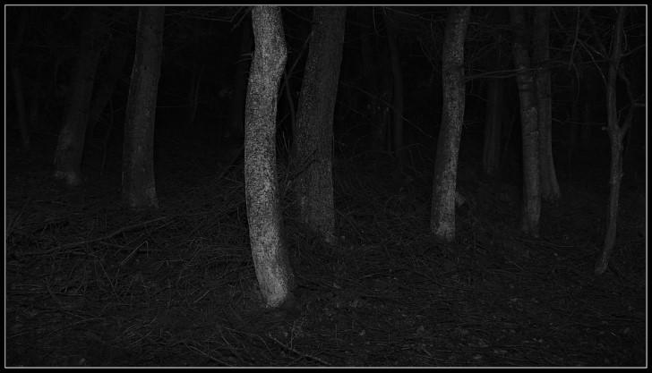 Oscuridad en el bosque