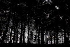 Silueta entre los arboles de un bosque