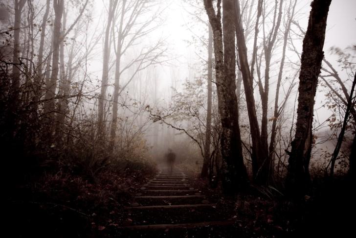 Silueta solitaria en el bosque