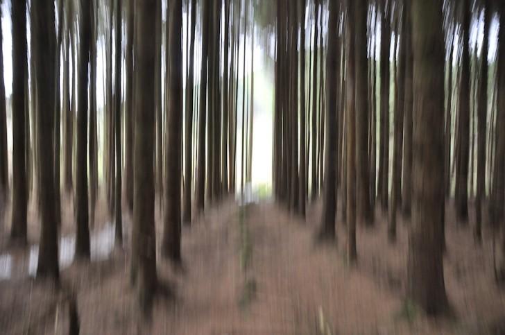 Vision borrosa en el bosque