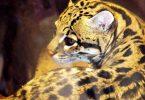 Leopardus pardalis ocelote