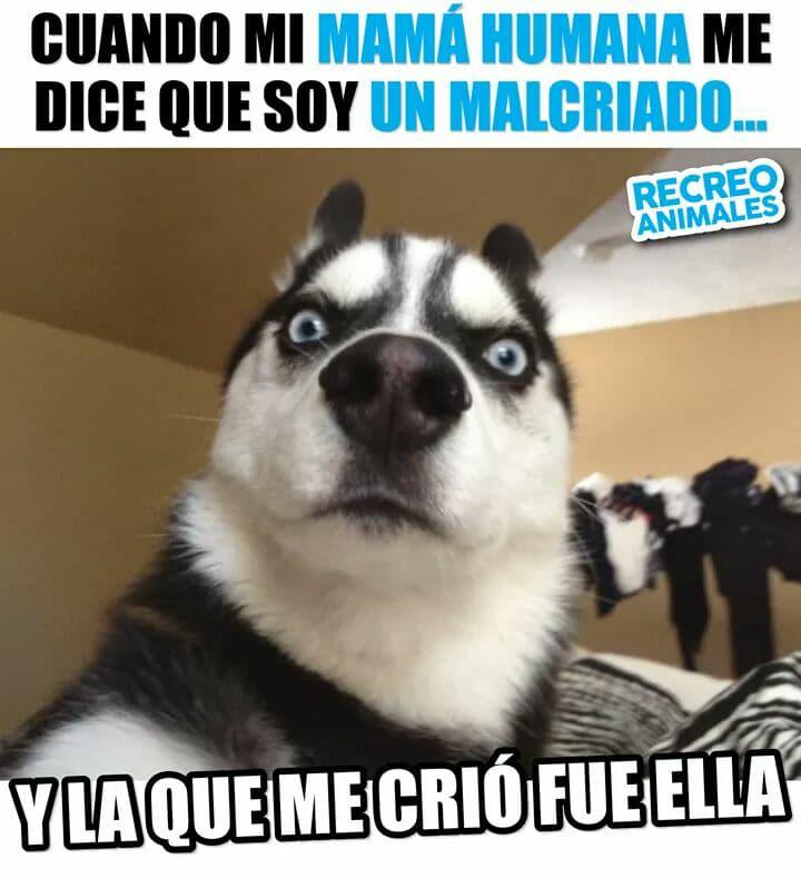 Marcianadas 326 060418001801 (209)