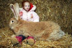 Charlotte garside conejo