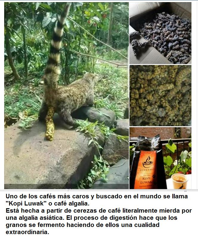 Marcianadas 330 04052018001721 (85)