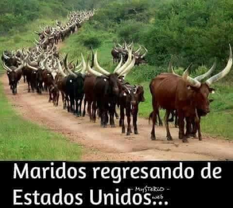 Marcianadas 332 180518001945 (228)
