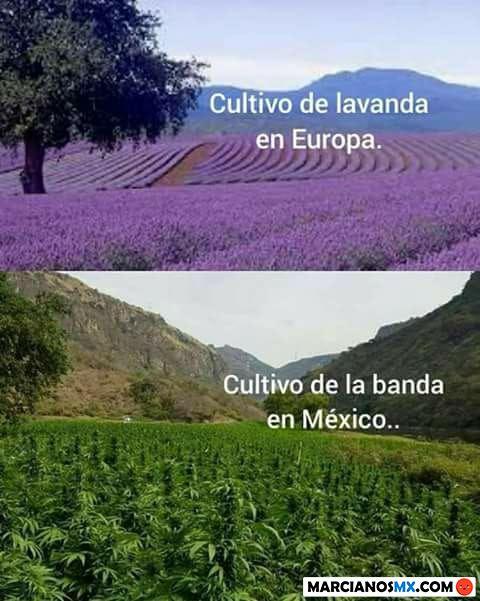 Marcianadas 334 010618001426 (46)