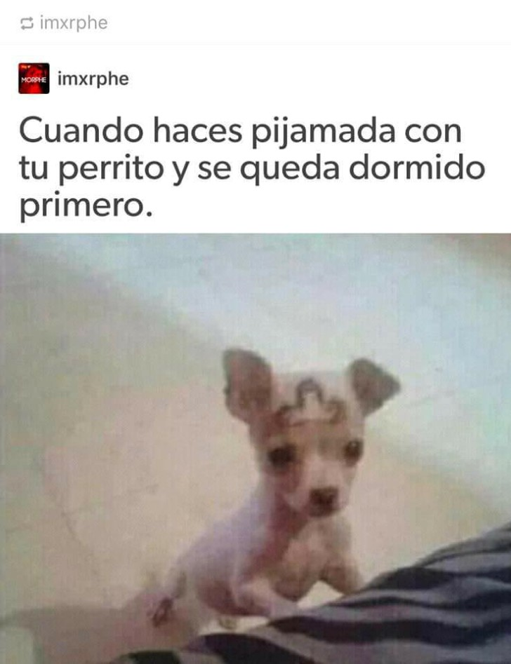 Marcianadas 334 010618001426 (73)