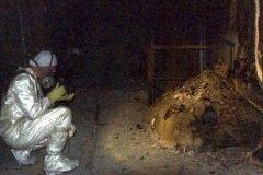 Pata de elefante dos en chernobil