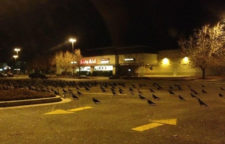 Perturbador cuervos en la calle