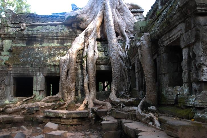 Angkor wat arboles