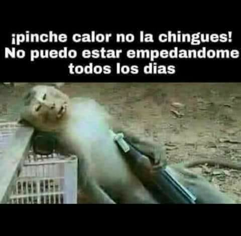 Marcianadas 335 080618001432 (257)