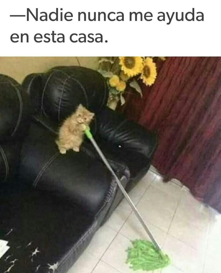 Marcianadas 335 080618001432 (27)