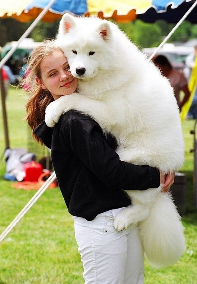 Animales reacciones (19)