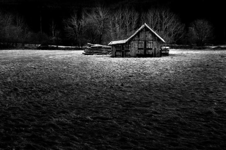 Casa desolada en el medio del bosque