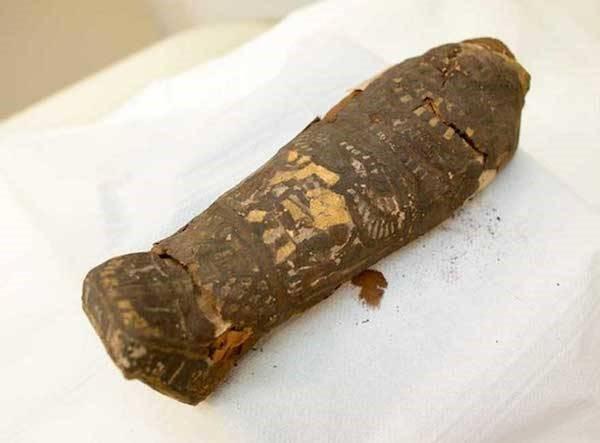 Feto momificado museo maidstone