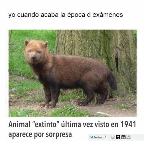 Marcianadas 339 200718001621 (283)