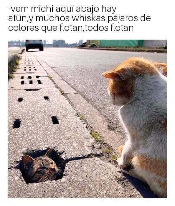 Marcianadas 340 27072018001920 (177)