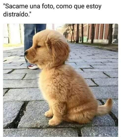 Marcianadas 340 27072018001920 (220)