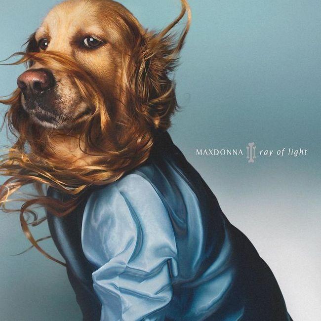 Max el perro imita a madonna (12)
