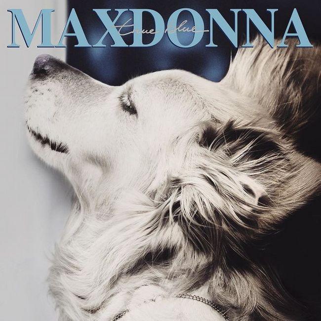 Max el perro imita a madonna (16)