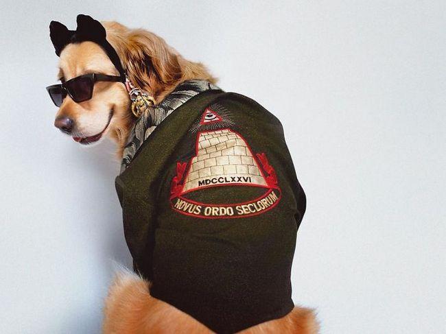 Max el perro imita a madonna (18)