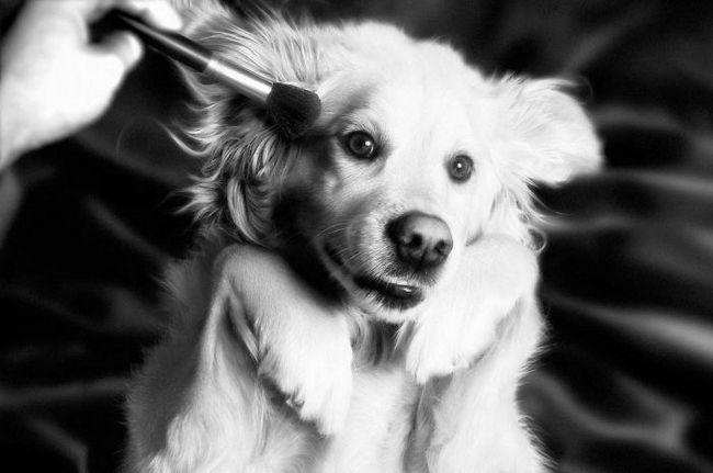 Max el perro imita a madonna (6)