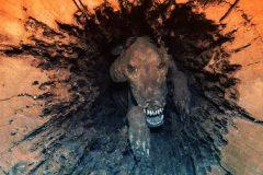 Stuckie perro momificado