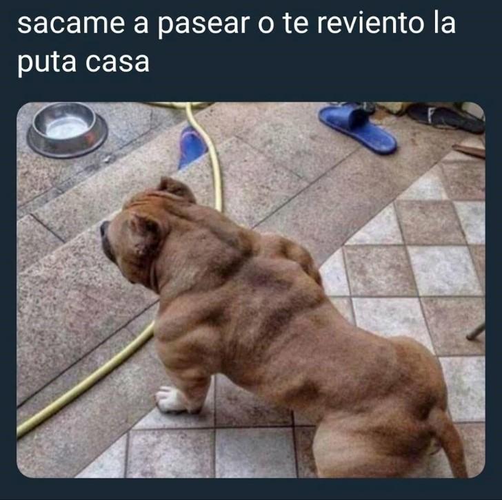 Marcianadas 342 100818002112 (34)