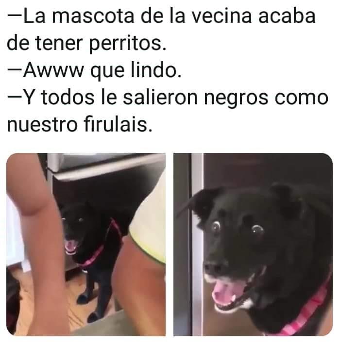 Marcianadas 343 171818001310 (13)