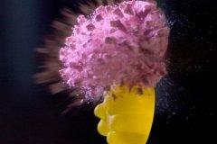 Explotando el cerebro de un gummy bear