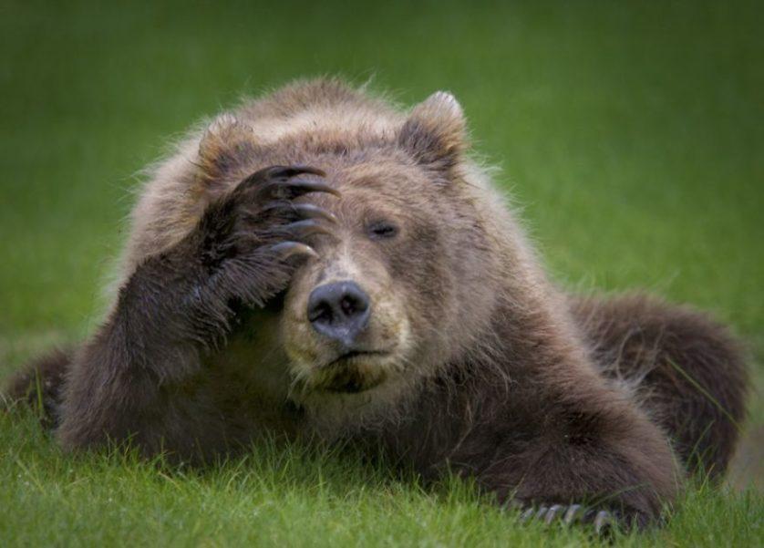 Daniella dermo resaca de oso