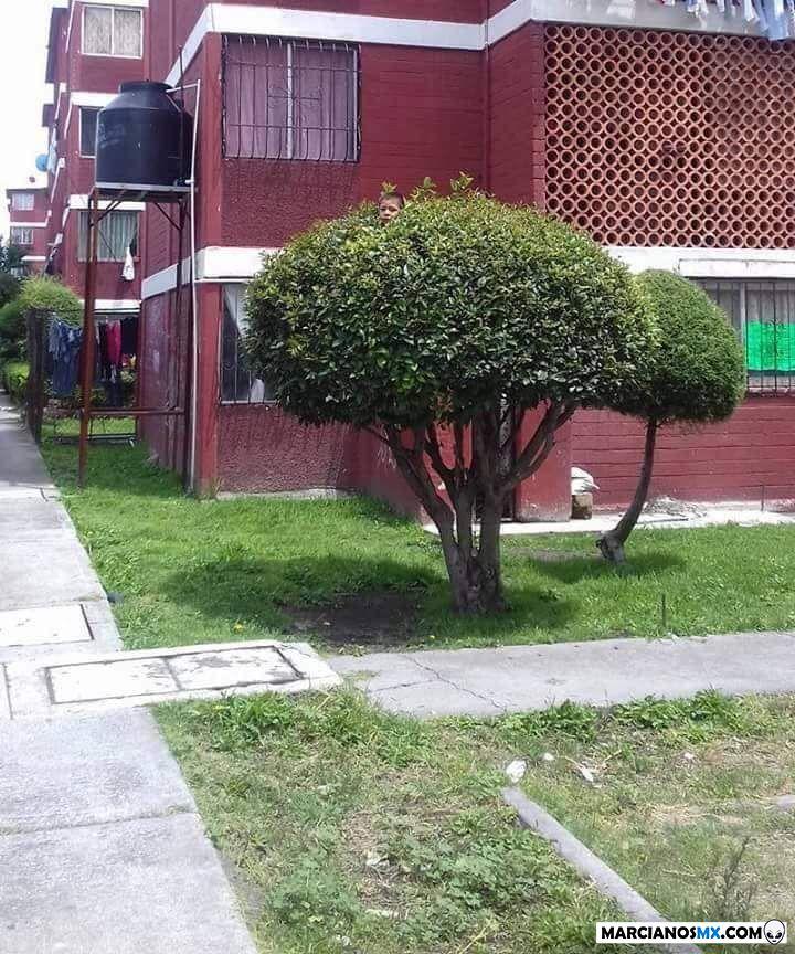 Marcianadas 349 281918001723 (182)