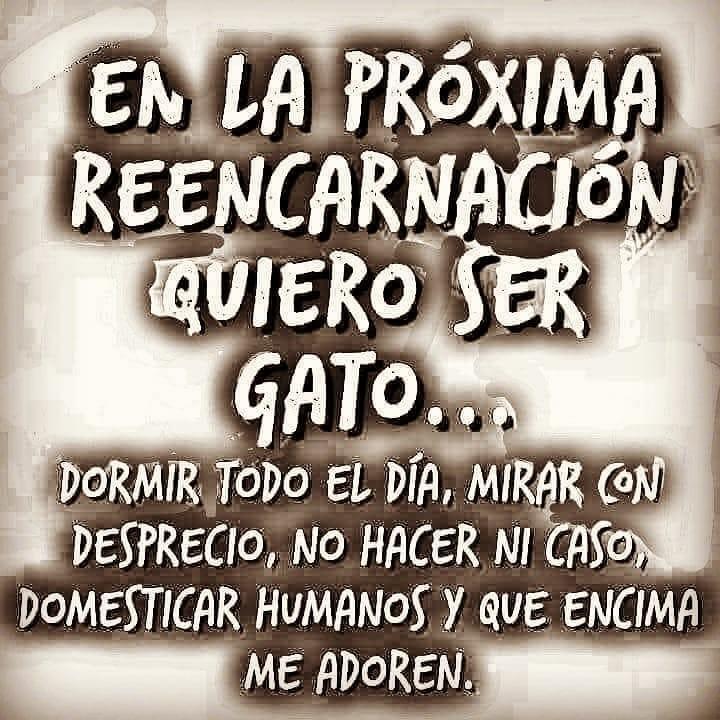Marcianadas 349 281918001723 (32)
