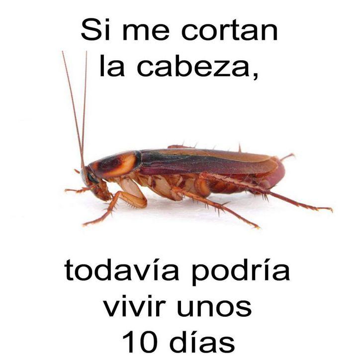 Marcianadas 349 c6 (10)