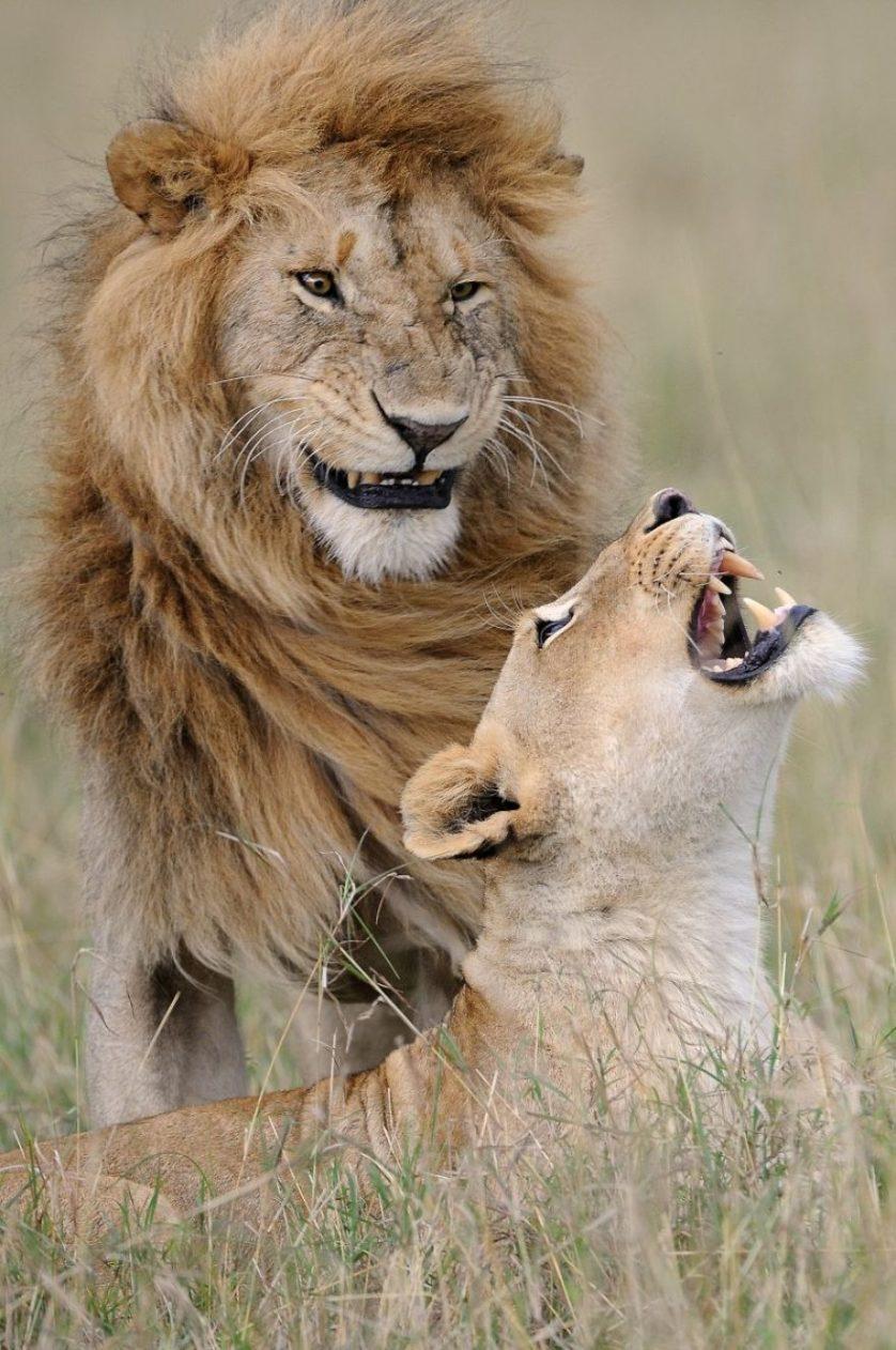 Muriel vekemans leoes riendo