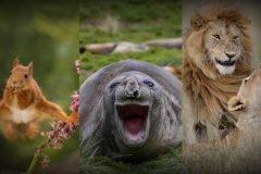 Premio a fotografía de comedia de la vida salvaje
