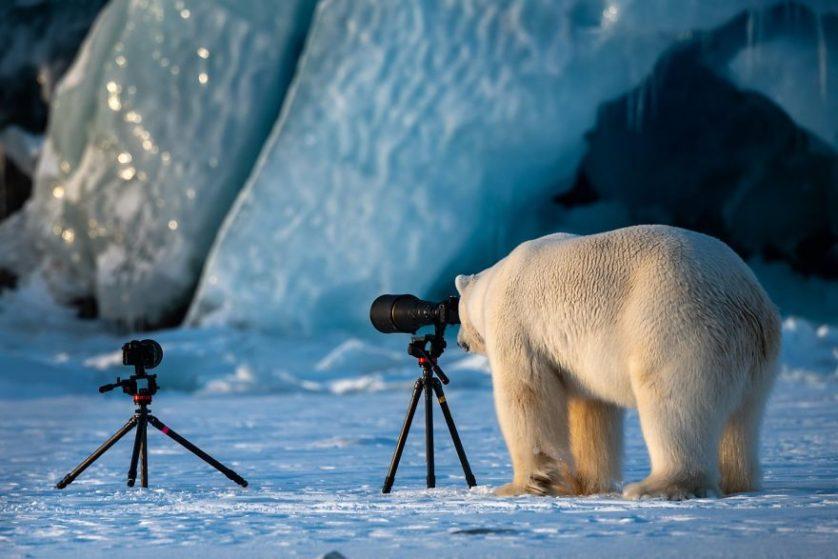 Roie galitz oso polar fotografo