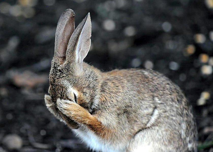 Daniel friend conejo arrepentido