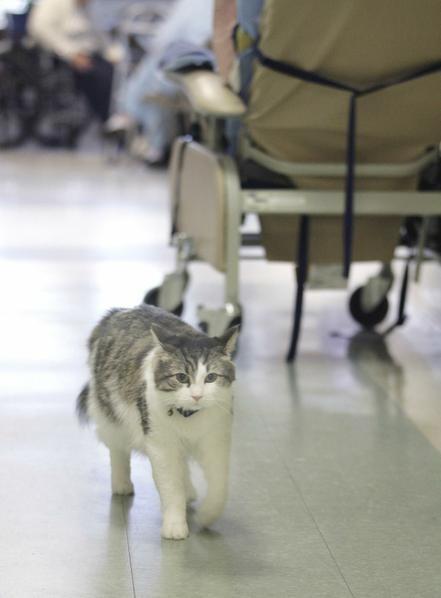 Oscar el gato que predice la muerte