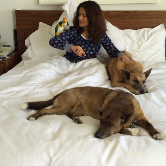 Salma hayek perros en la cama