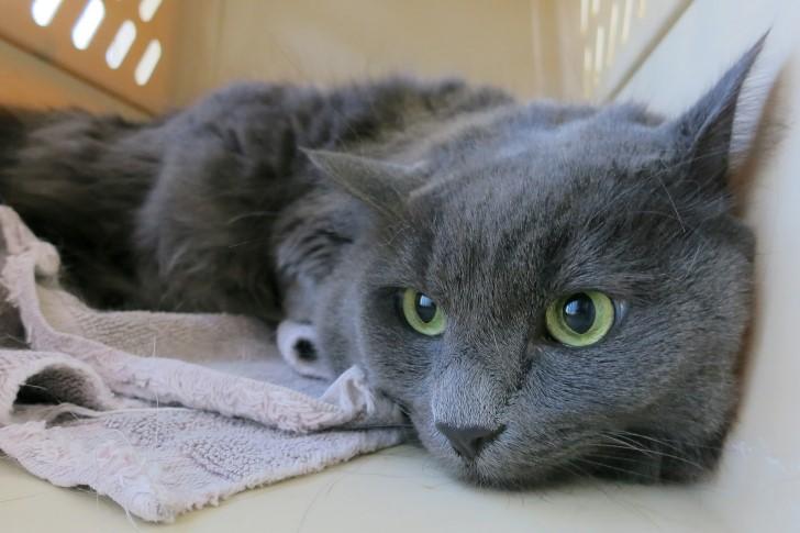 gato en caja trasportadora