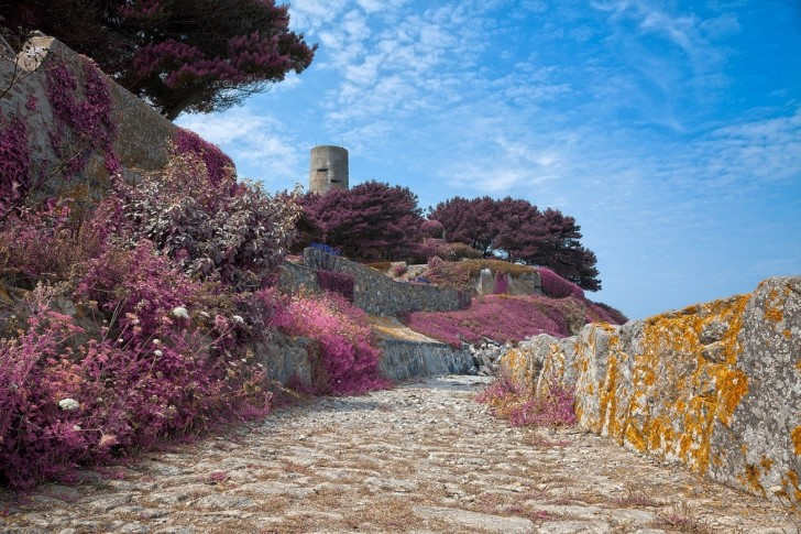 plantas purpuras