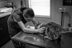 veterinaria revisa gato