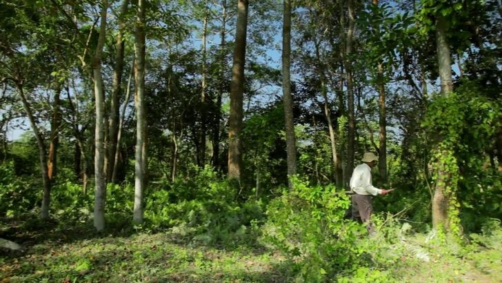 Jadav payeng en el bosque