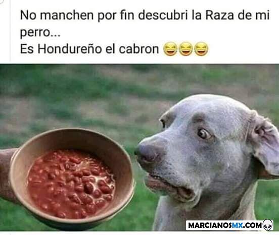 Marcianadas 357 23112018001500 (71)