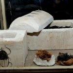 escarabajos momificados en egipto (2)