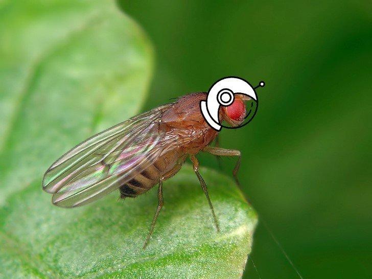 mosca astronauta