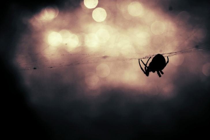 Silueta araña sobre telaraña
